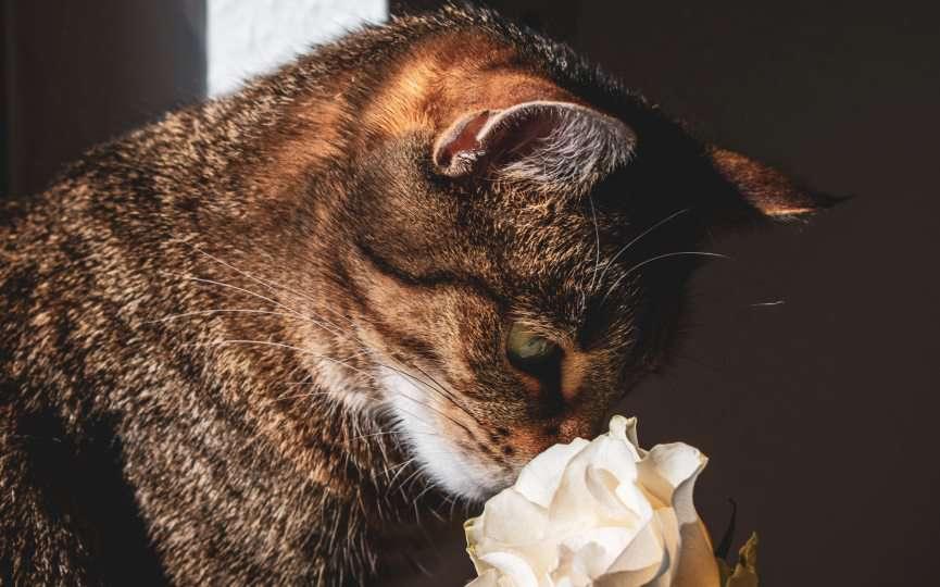 olores fuertes de los gatos