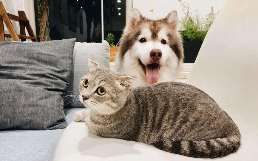 miedo de los gatos a los perros