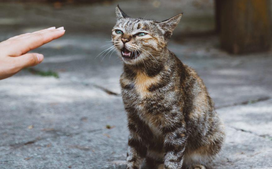 miedo a los desconocidos de los gatos