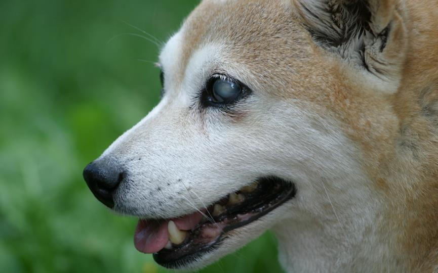 perro ciego