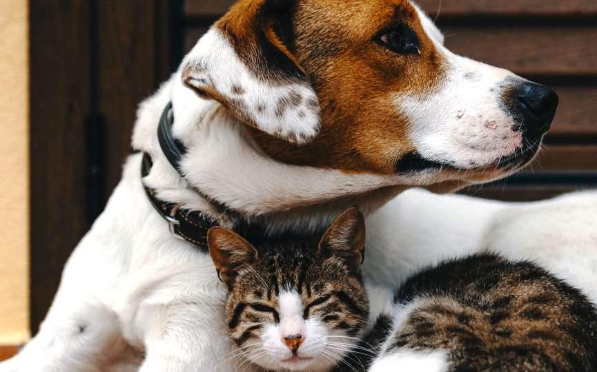 memoria perro gato