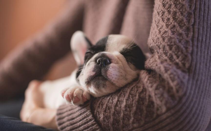 motivos por los que mi perro duerme mucho