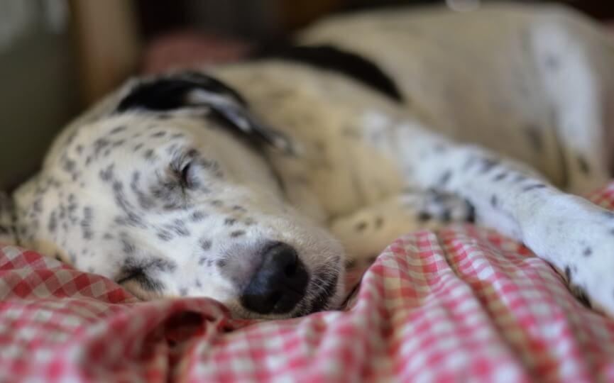 la diabetes es un sintoma de que tu perro duerma mucho