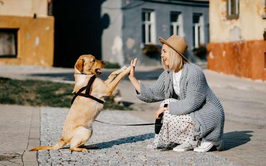 permiso empresa cuidar mascotas