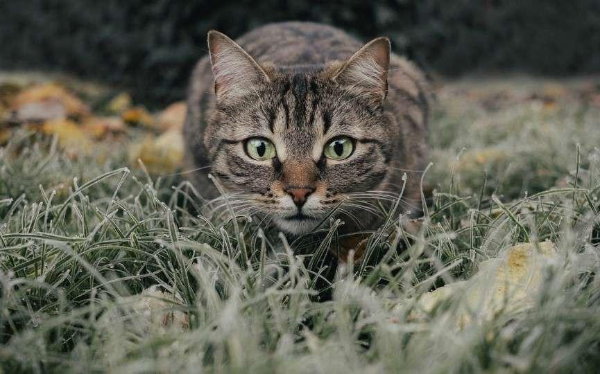 gatos asilvestrados