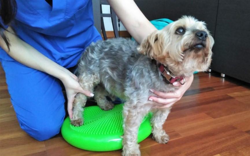 Luxación de rótula en perros