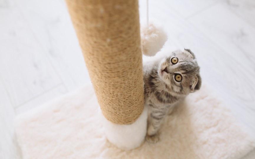 Gato sufre desungulación