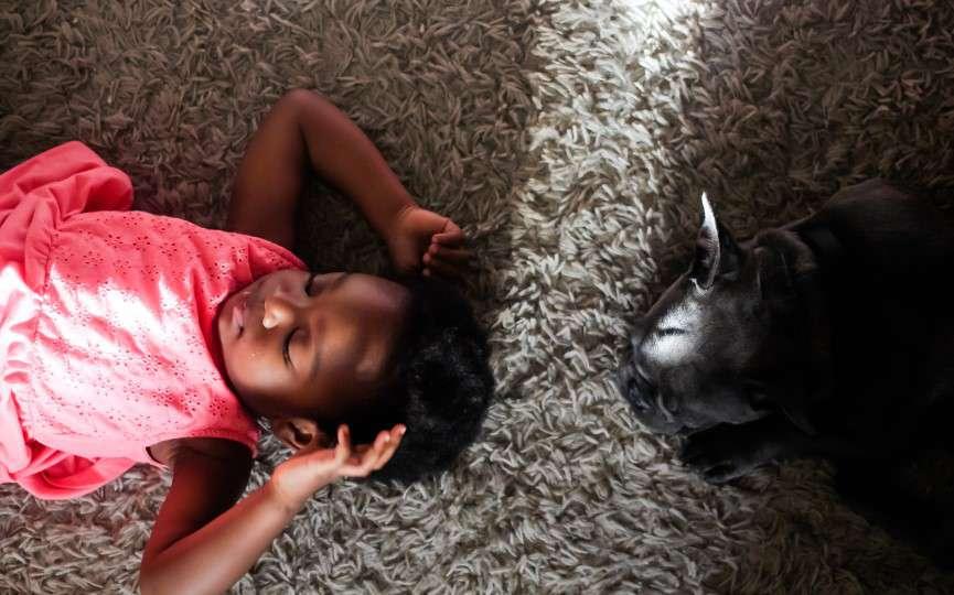 perros y gatos fuente de bienestar para niños