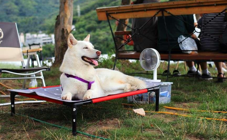 Zona de descanso de un perro