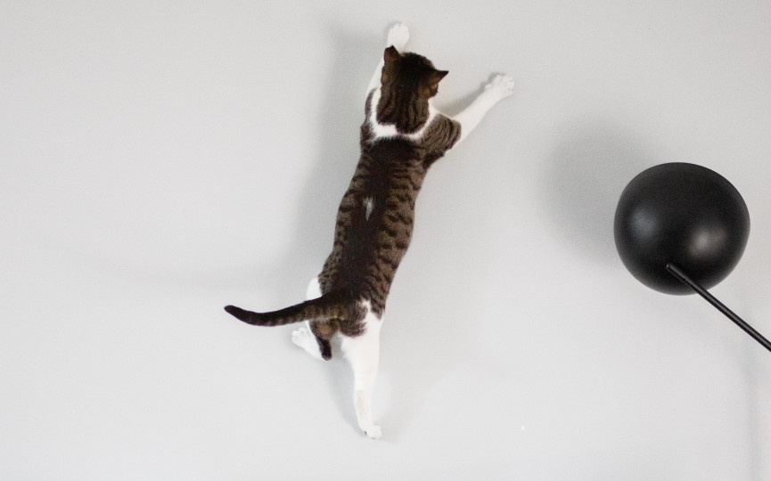 gatos durante el confinamiento