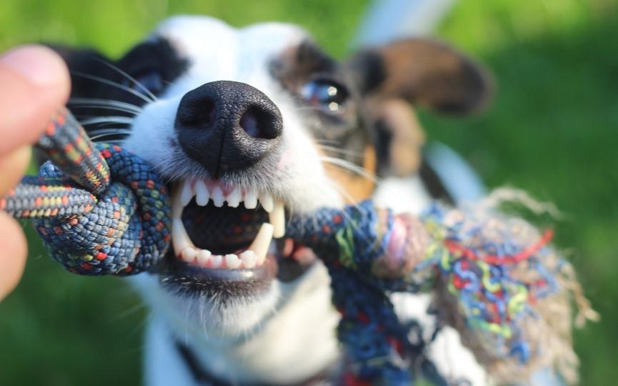 cuidar la boca de tu perro