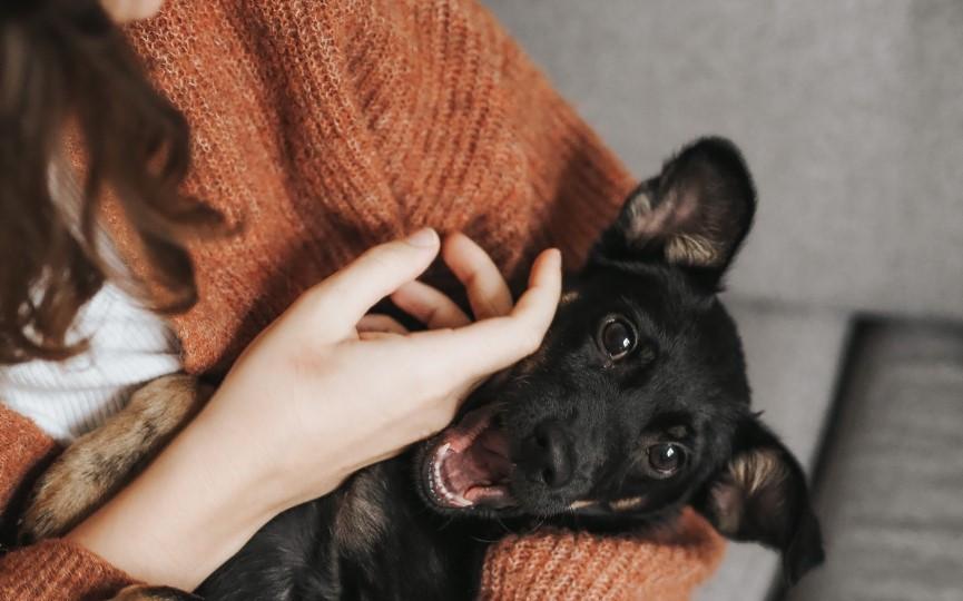 pequeños problemas de salud en mascotas