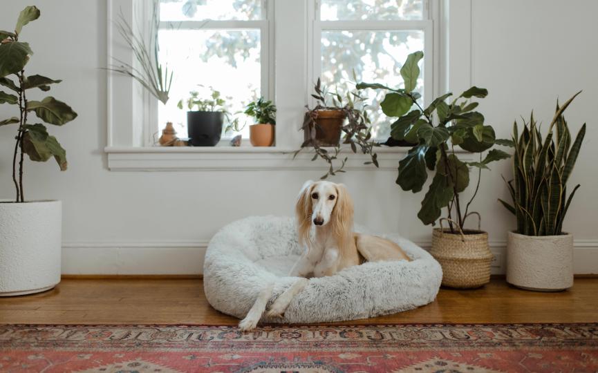 Terapias de medicina alternativa en mascotas